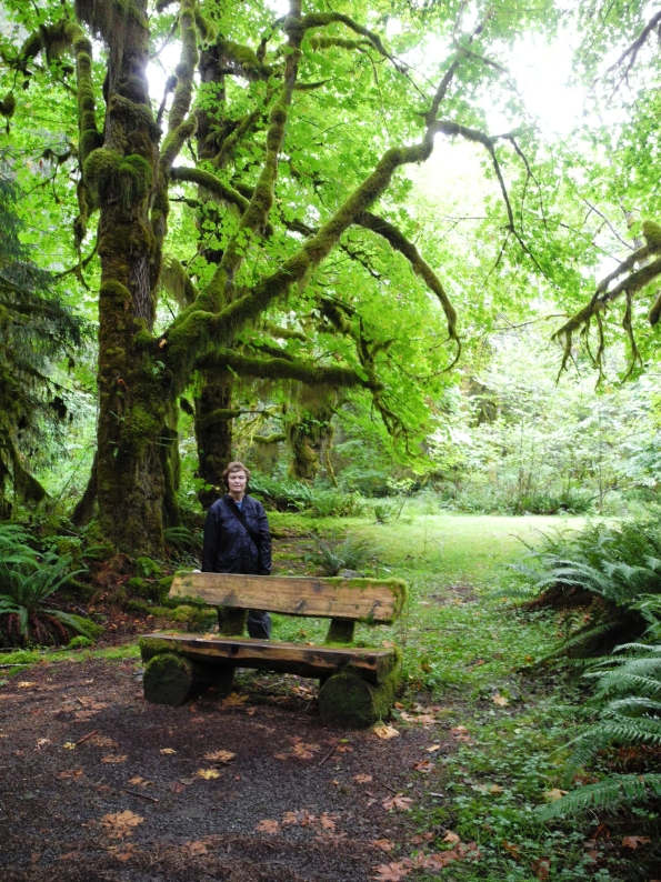 On the trail in Quinault