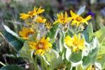 wildflowers along thetrail
