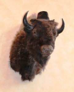 Arbuckle Lodge Bison