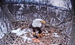 Rebuilding the nest