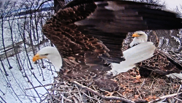 Left side of nest takeoff