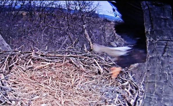 WP eagle takoff