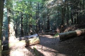 Longfellow Trail