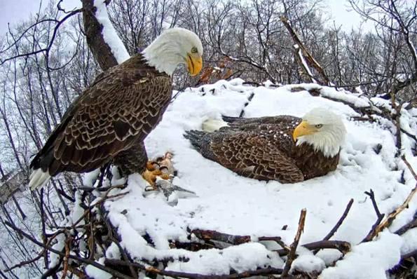snow nest